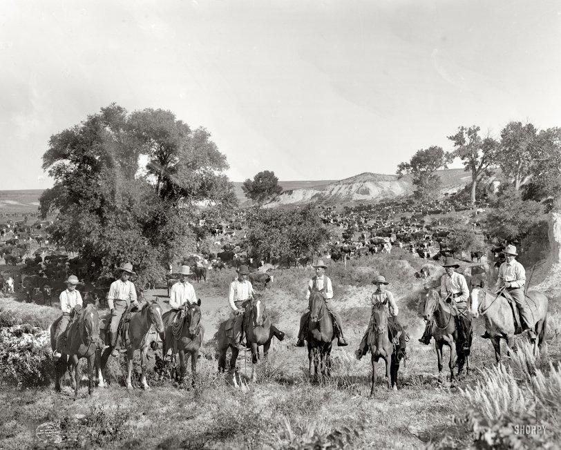 Cowpokes: 1901