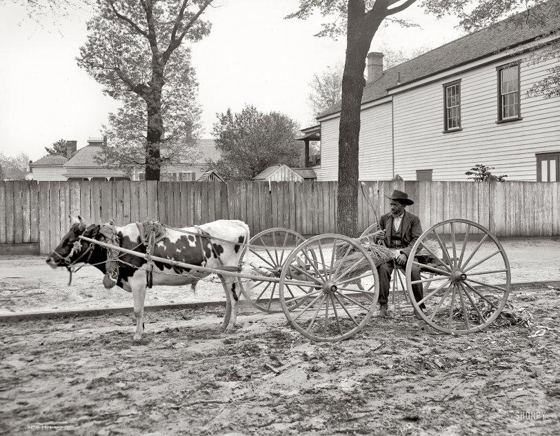 Carolina Huckster: 1905