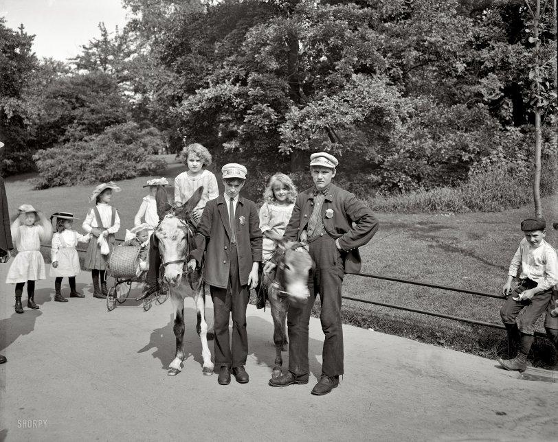Donkey Boys: 1904