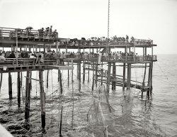 Hauling the Nets: 1904
