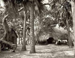 Joe's Jungle Bungalow: 1904