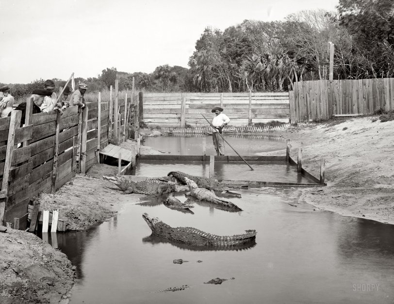 Alligator Joe: 1904
