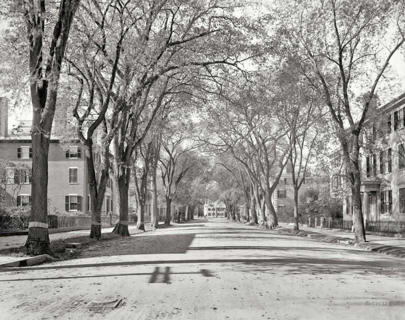 Chestnut Street: 1906