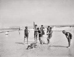 Dog on the Beach: 1905