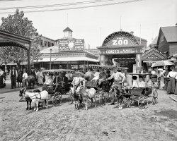 At the Zoo: 1904