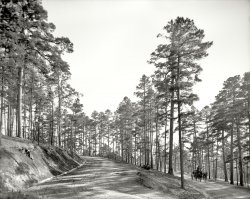 In the Pines: 1905