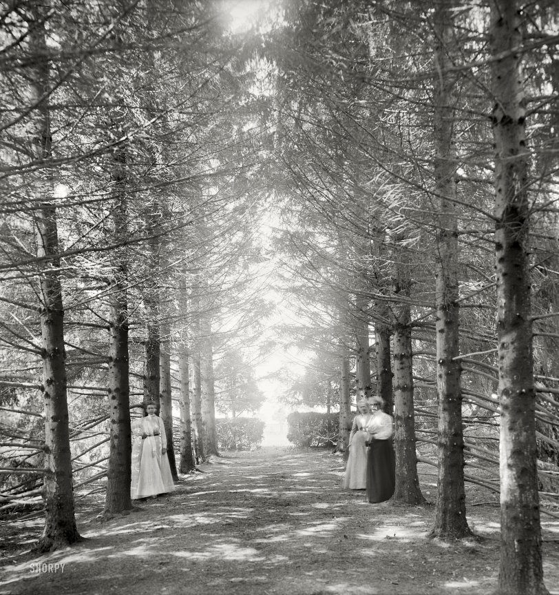 Shining Path: 1901