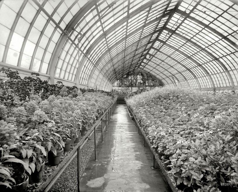 Grayhouse: 1910