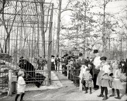 The Bear Pits: 1910