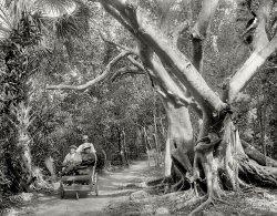 The Jungle Trail: 1910