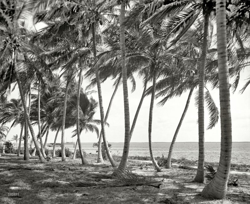 Miami Monochrome: 1910