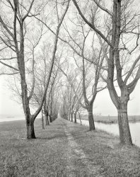 These Trees: 1910