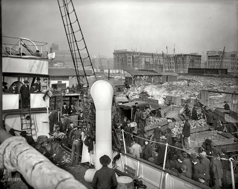 Bananas to Baltimore: 1905