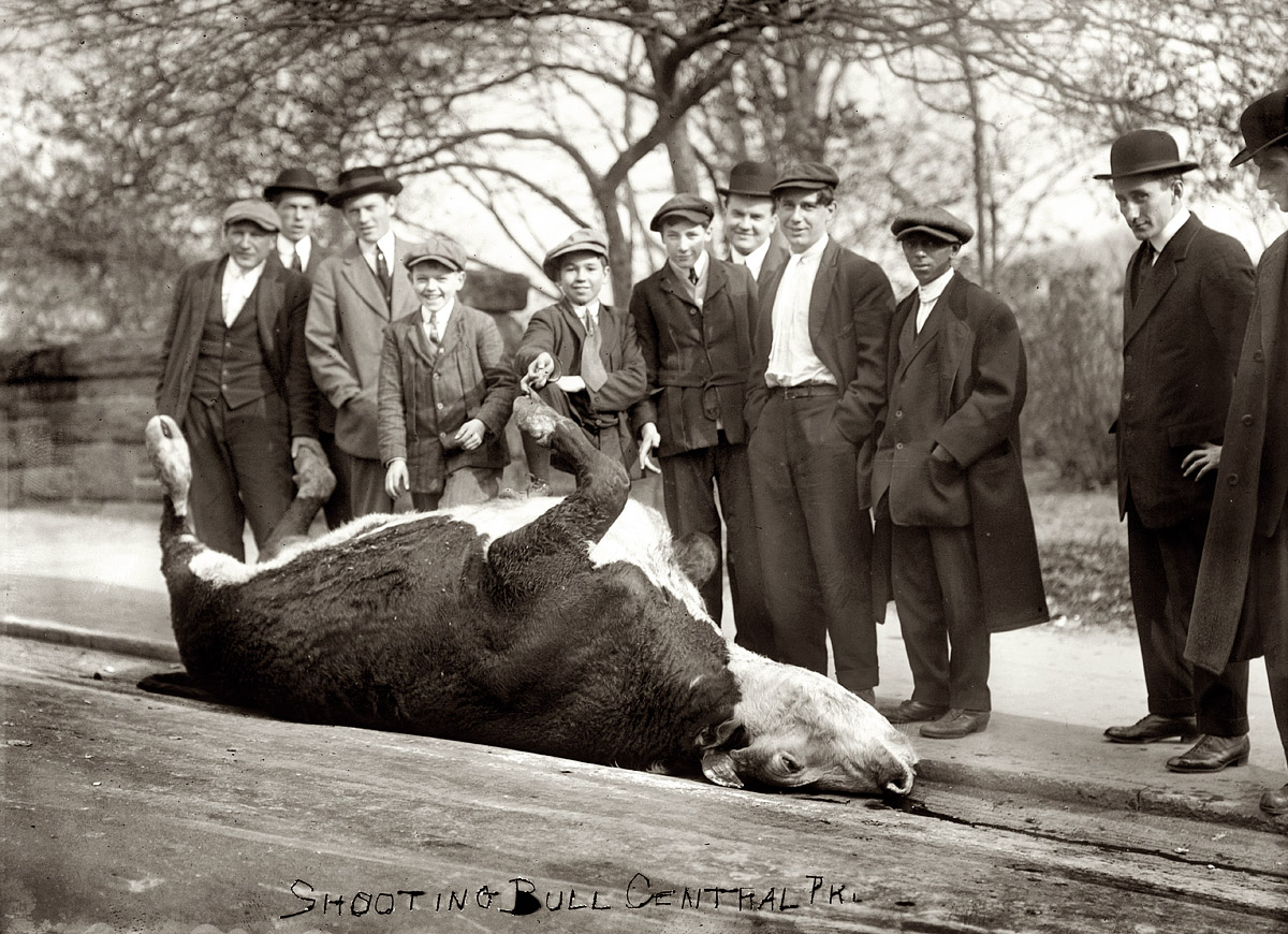 Shorpy Historic Picture Archive :: Shooting the Bull: 1913 high-resolution  photo