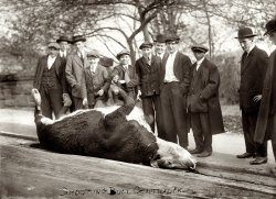 Shooting the Bull: 1913