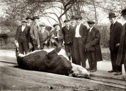 Shooting the Bull: 1913