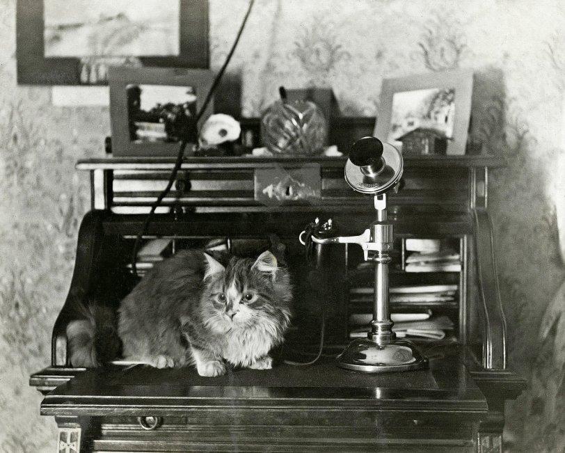 Cat Phone: 1913