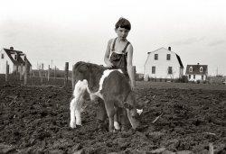 A Kid and His Calf: 1940