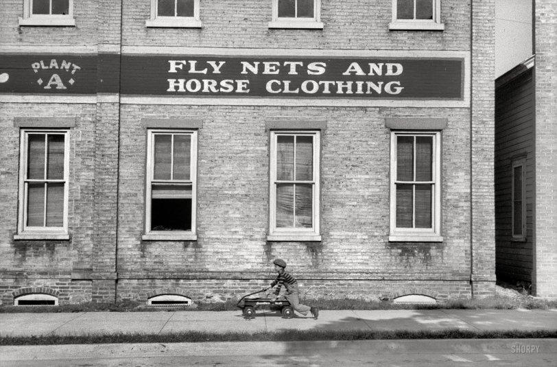 Horse Clothing: 1940