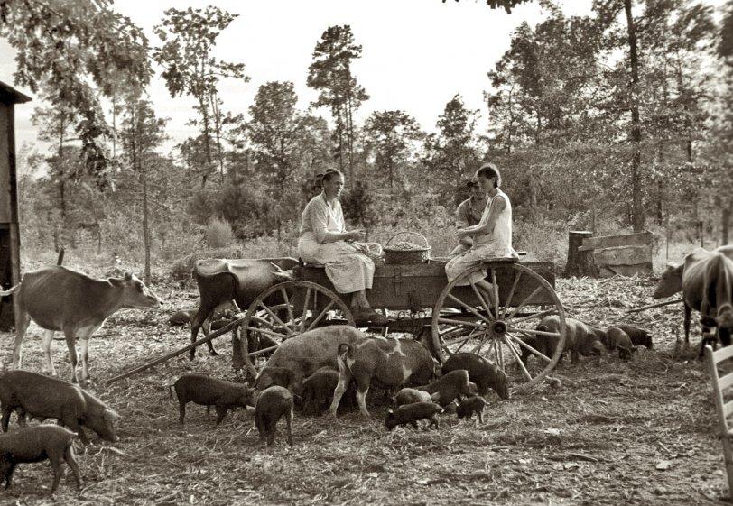 Wolf Creek: 1935