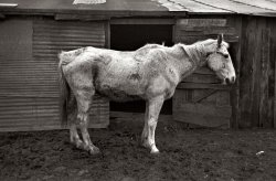 Ghost Horse: 1936