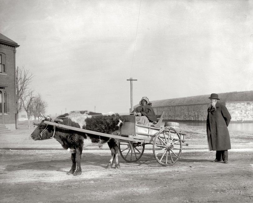 Aunt Charlotte: 1900