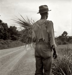 Mississippi Cotton Patch: 1936