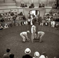 Cockfight: 1937