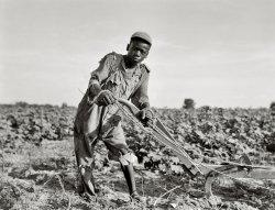 Americus: 1937