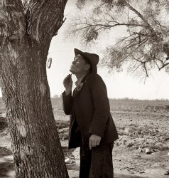 The Wayfarer: 1939