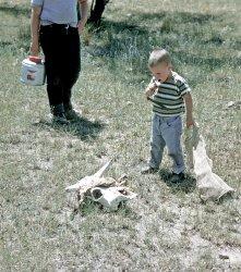 An Arizona Experience: 1962