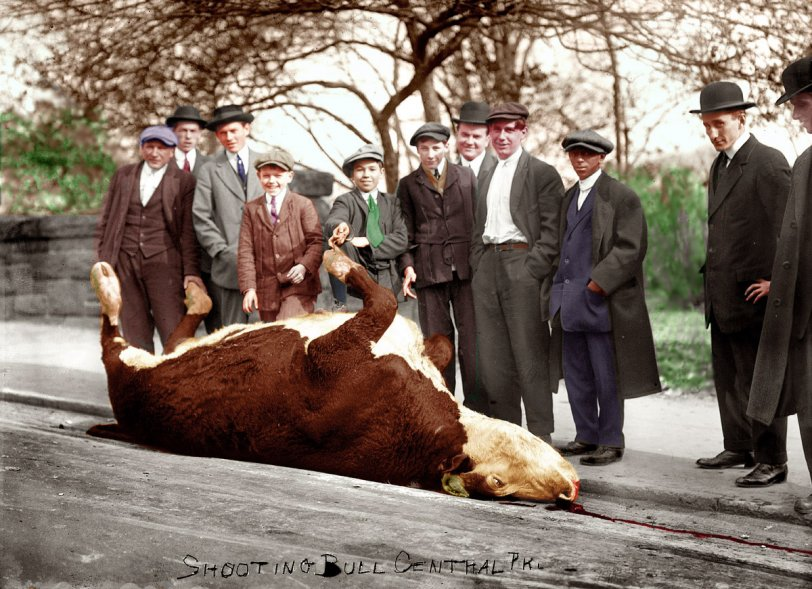 Shooting the Bull (Colorized)