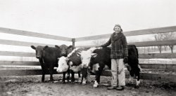 Cows and Me: 1942