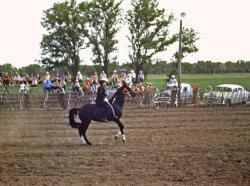 Dancing Horse: 1953