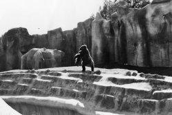 Zoo Poo: 1971