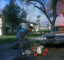 Lawn Edger man