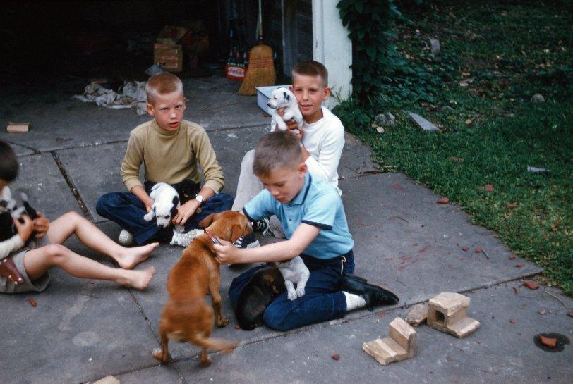Linda-Susie's Puppies: 1961