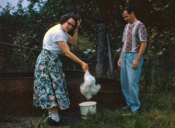 Chicken Plucking: 1950