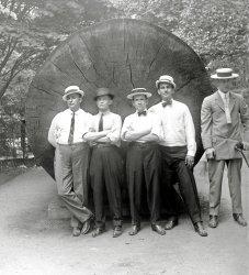 Palmer Park c.1910