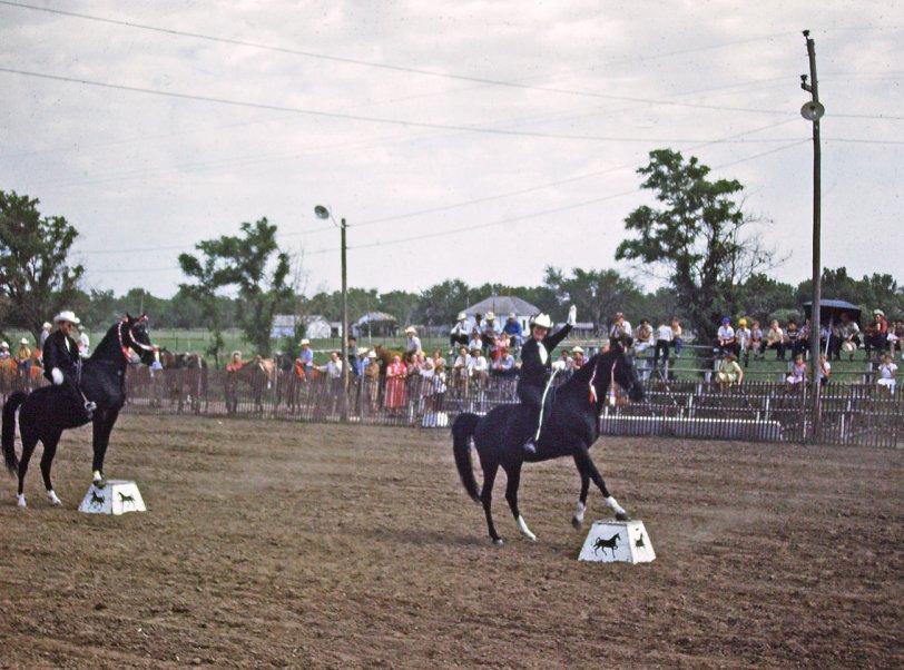 Posing Horses: 1953
