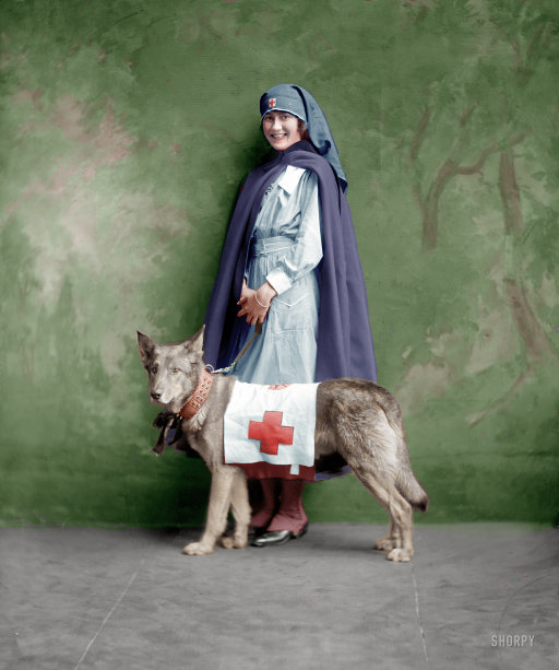 Red Cross Dog (Colorized): 1917