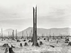 Stumpy Valley: 1939