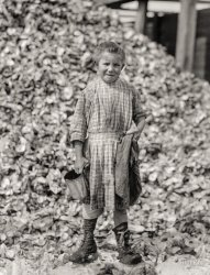 Tiny Shucker: 1912