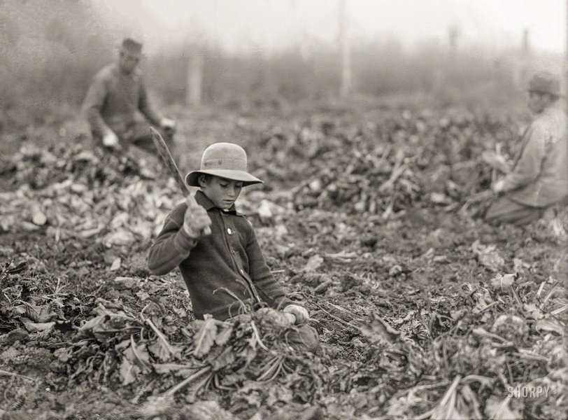 Topper in the Beets: 1915