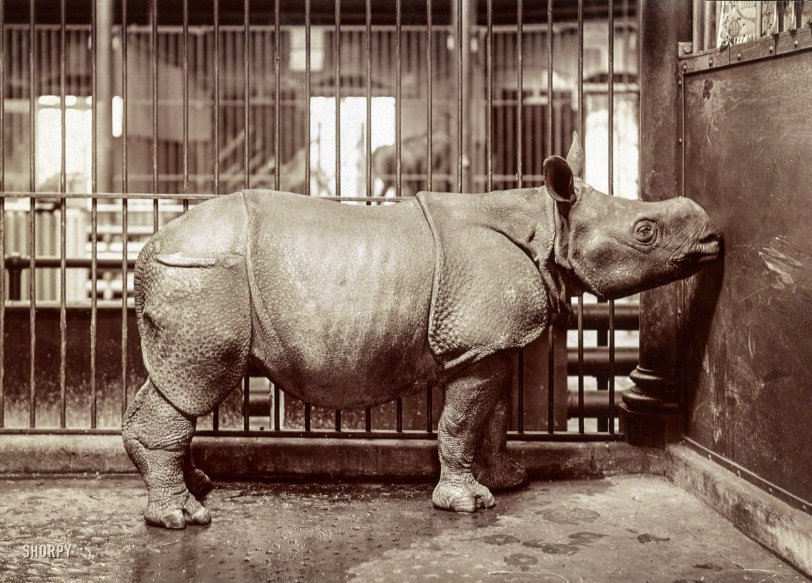 The Bronx Zoo: 1910