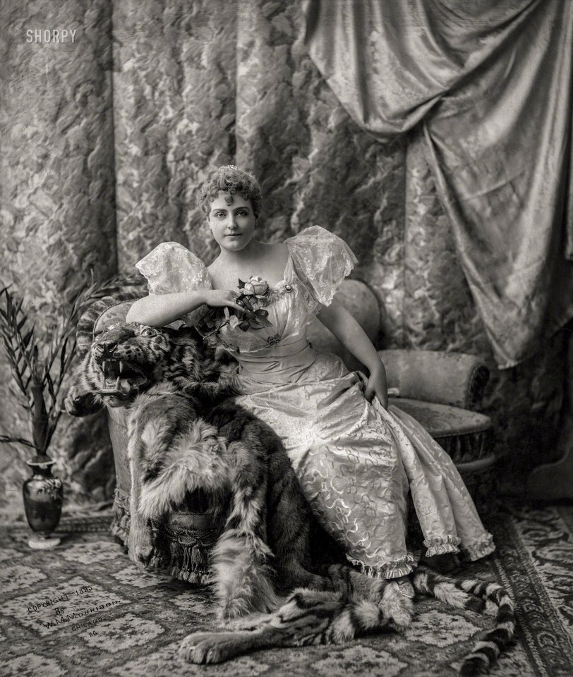Wildcats: 1893