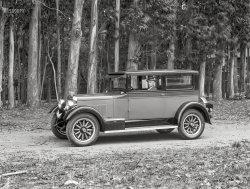 Among the Eucalypti: 1926