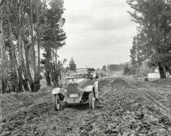 Trailblazers: 1917
