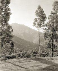 Mt. Tam: 1910
