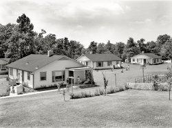 Nuclear Families: 1951